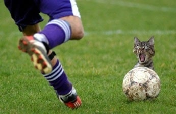 Photo of a funny cat sitting behind a soccer ball about to get kicked